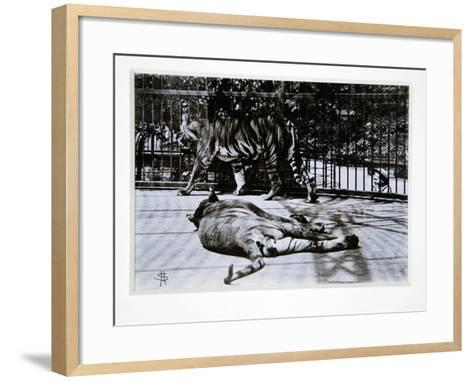 Tigers at London Zoo, 1870S-English Photographer-Framed Art Print