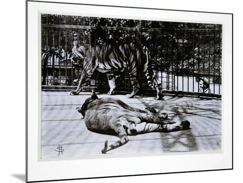 Tigers at London Zoo, 1870S-English Photographer-Mounted Giclee Print