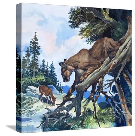 Puma on the Prowl, 1963-G^ W Backhouse-Stretched Canvas Print