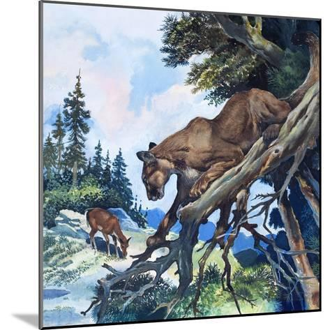 Puma on the Prowl, 1963-G^ W Backhouse-Mounted Giclee Print