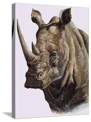 White Rhinoceros, 1980-English School-Stretched Canvas Print