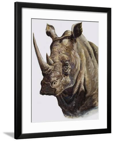 White Rhinoceros, 1980-English School-Framed Art Print