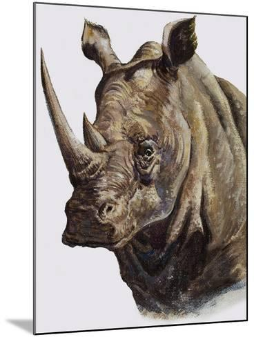 White Rhinoceros, 1980-English School-Mounted Giclee Print