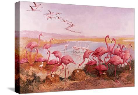 Pink Flamingoes- Syde-Stretched Canvas Print