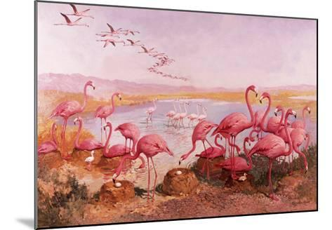 Pink Flamingoes- Syde-Mounted Giclee Print