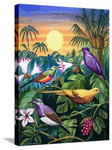 Tropical Sunbirds-John Chalkley-Stretched Canvas Print