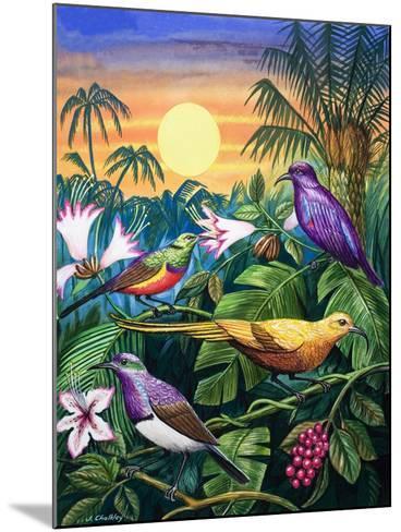 Tropical Sunbirds-John Chalkley-Mounted Giclee Print
