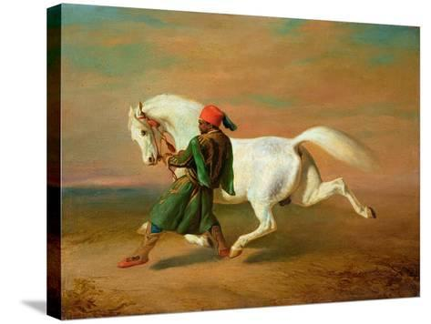 The Pasha's Pride-Alfred De Dreux-Stretched Canvas Print