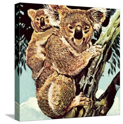 Koala Bear-English School-Stretched Canvas Print