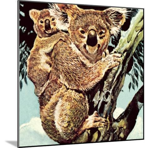 Koala Bear-English School-Mounted Giclee Print