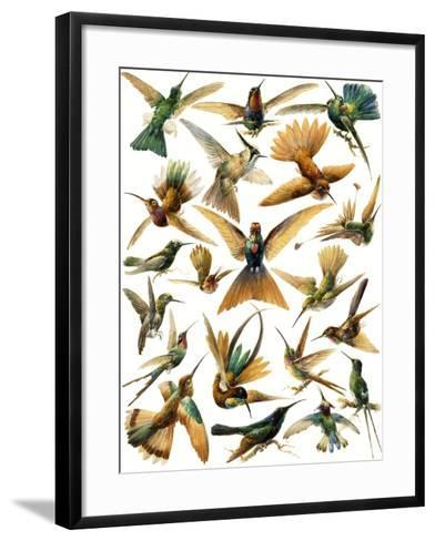 Humming Birds-English School-Framed Art Print