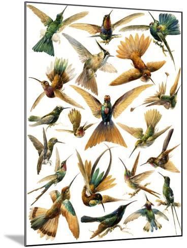 Humming Birds-English School-Mounted Giclee Print