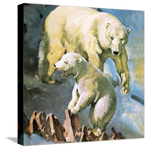Polar Bear-McConnell-Stretched Canvas Print