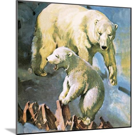 Polar Bear-McConnell-Mounted Giclee Print