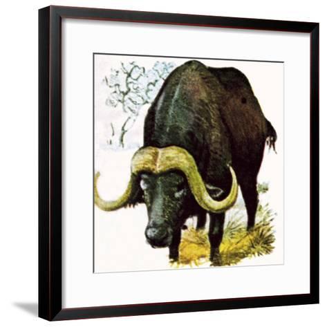 Water Buffalo-English School-Framed Art Print