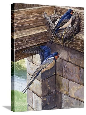 Swallows-English School-Stretched Canvas Print