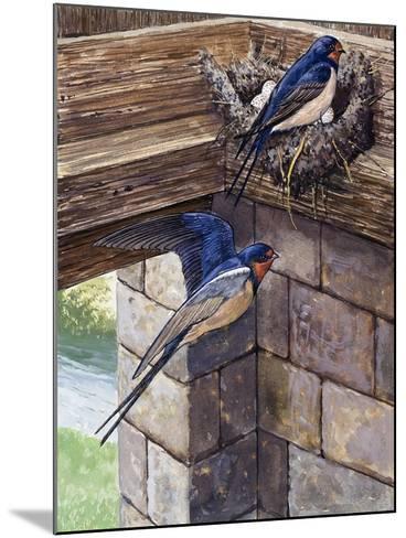 Swallows-English School-Mounted Giclee Print