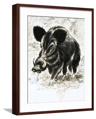 Wild Boar-English School-Framed Art Print