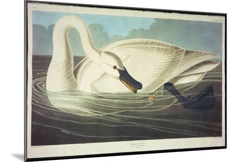 Trumpeter Swan-John James Audubon-Mounted Giclee Print