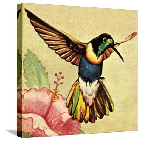 Humming Bird-English School-Stretched Canvas Print