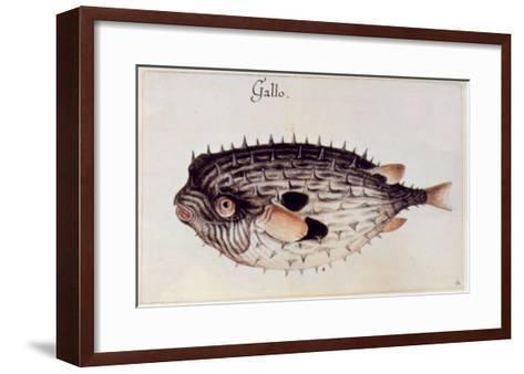 A Burrfish-John White-Framed Art Print