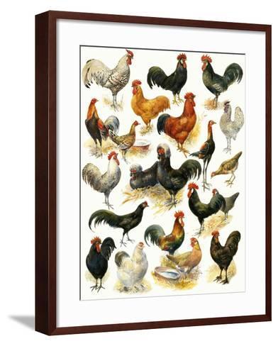 Poultry-English School-Framed Art Print