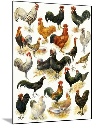Poultry-English School-Mounted Giclee Print