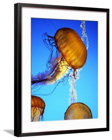 Jellyfish in Monterey Bay Aquarium-Douglas Steakley-Framed Art Print