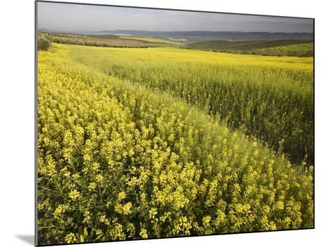 Rape Crop Flowers in Springtime in Northwestern Jaen Province-Diego Lezama-Mounted Photographic Print