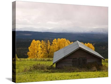 Traditional Wooden Barn, Yellow Aspens and Fjells with First Snow in Autumn-Christer Fredriksson-Stretched Canvas Print