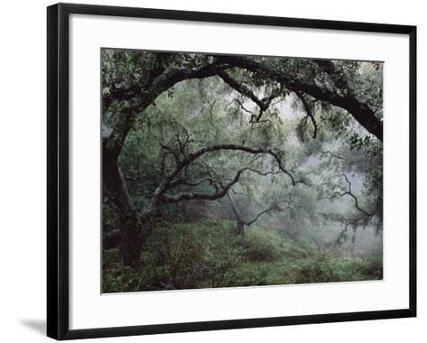 Oak Tree Forest after Storm-Douglas Steakley-Framed Art Print