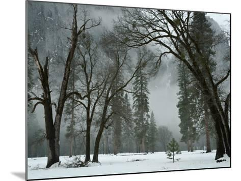 Arching Black Oaks-Douglas Steakley-Mounted Photographic Print