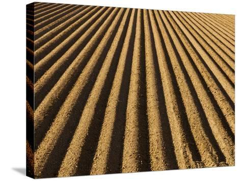 Ploughed Field-Douglas Steakley-Stretched Canvas Print