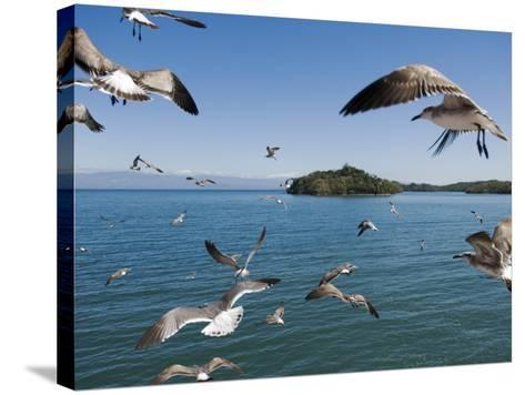 Birds Flying Along Ferry Ride Between Peninsula De Nicoya and Puntarenas.-Christian Aslund-Stretched Canvas Print