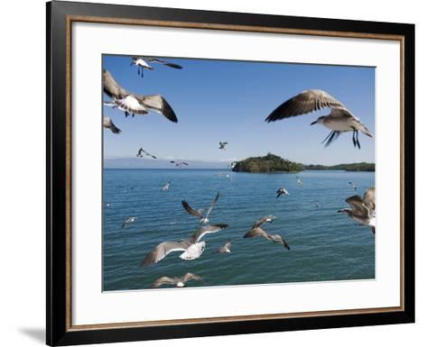 Birds Flying Along Ferry Ride Between Peninsula De Nicoya and Puntarenas.-Christian Aslund-Framed Art Print
