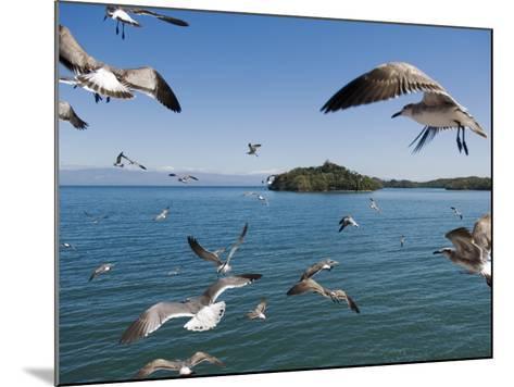 Birds Flying Along Ferry Ride Between Peninsula De Nicoya and Puntarenas.-Christian Aslund-Mounted Photographic Print