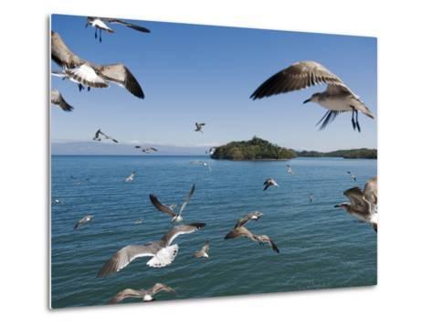 Birds Flying Along Ferry Ride Between Peninsula De Nicoya and Puntarenas.-Christian Aslund-Metal Print