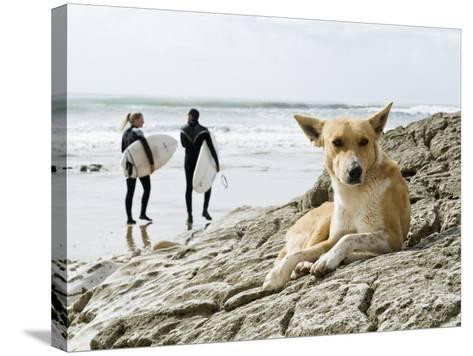 Dog Resting and Surfers Walking Along Beach at Anchor Point-Christian Aslund-Stretched Canvas Print