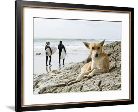 Dog Resting and Surfers Walking Along Beach at Anchor Point-Christian Aslund-Framed Art Print