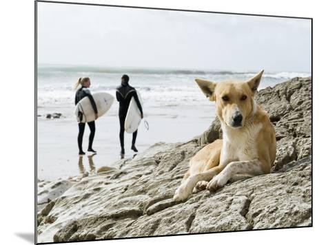 Dog Resting and Surfers Walking Along Beach at Anchor Point-Christian Aslund-Mounted Photographic Print