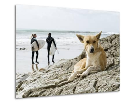Dog Resting and Surfers Walking Along Beach at Anchor Point-Christian Aslund-Metal Print