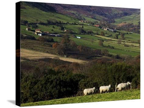 Fields and Farm, North York Moors National Park-Doug McKinlay-Stretched Canvas Print
