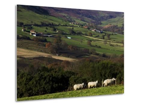 Fields and Farm, North York Moors National Park-Doug McKinlay-Metal Print