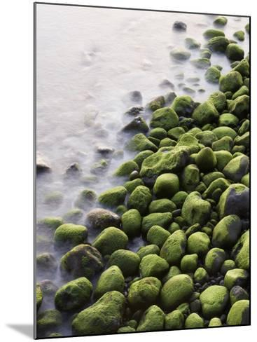 Algae-Covered Boulders on Beach-Holger Leue-Mounted Photographic Print