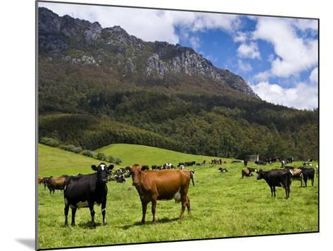Cows in Lush Pastures and the Rocky Peak of Mt Roland-Glenn Van Der Knijff-Mounted Photographic Print