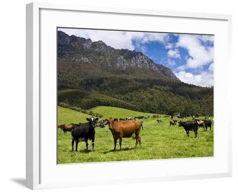 Cows in Lush Pastures and the Rocky Peak of Mt Roland-Glenn Van Der Knijff-Framed Art Print