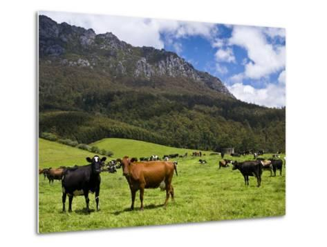 Cows in Lush Pastures and the Rocky Peak of Mt Roland-Glenn Van Der Knijff-Metal Print