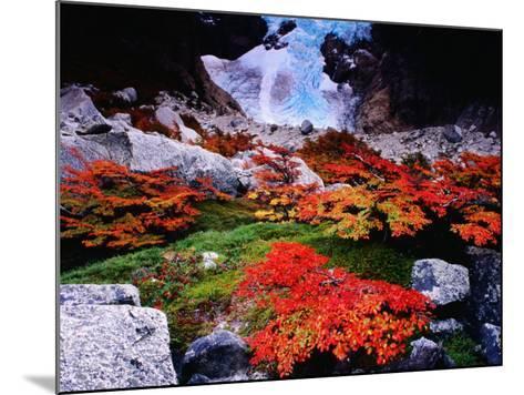Autumnal Foliage Beneath the Glacier Piedras Blancas-Gareth McCormack-Mounted Photographic Print