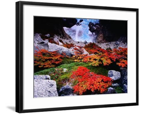 Autumnal Foliage Beneath the Glacier Piedras Blancas-Gareth McCormack-Framed Art Print