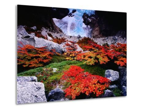 Autumnal Foliage Beneath the Glacier Piedras Blancas-Gareth McCormack-Metal Print